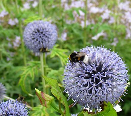 Bloementuin ooijs moois for Www bloem en tuin nl